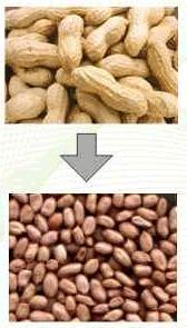 Mesin Pemecah Kulit Kacang 5