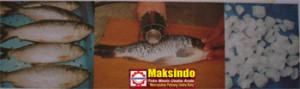 Mesin Penghilang Sisik Ikan 2